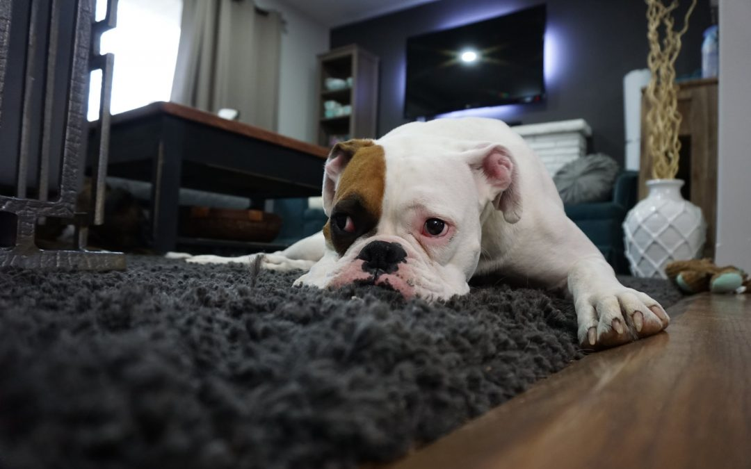 What Are The Best Carpet Options For Pet Owners?