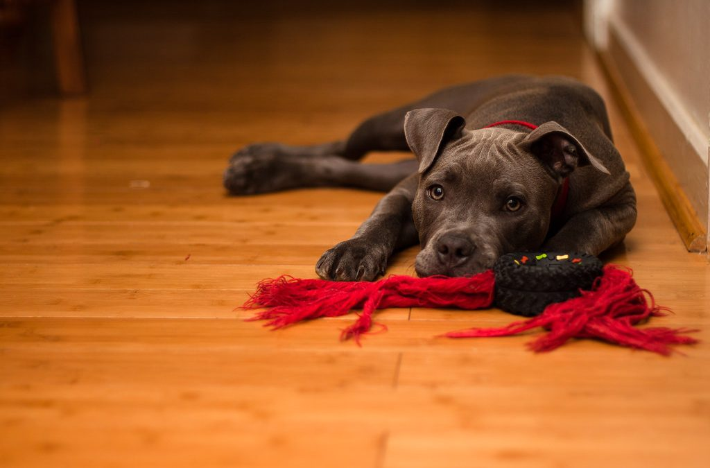 Easy Guide to Pet-Friendly Floors that can Take Scratches and Spills